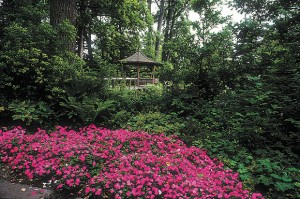 Annual impatiens, evolved to thrive in rich leaf litter in jungles, have shallow roots. They thrive when watered lightly and frequently.