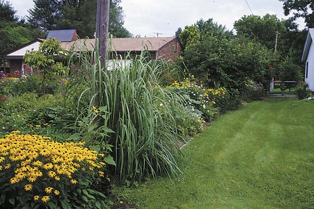 A straight line of plants need not have straight sides or tops. It can be tall at one end, short in the middle, medium height at the far end, as in this edge garden of black-eyed Susans (Rudbeckia 'Goldsturm'), ravenna grass (Erianthus or Saccharum ravennae), pearly everlasting (Anaphalis margaritacea), rose of Sharon (Hibiscus syriacus), perennial sunflower (Helianthus x multiflorus) and Viburnum opulus.