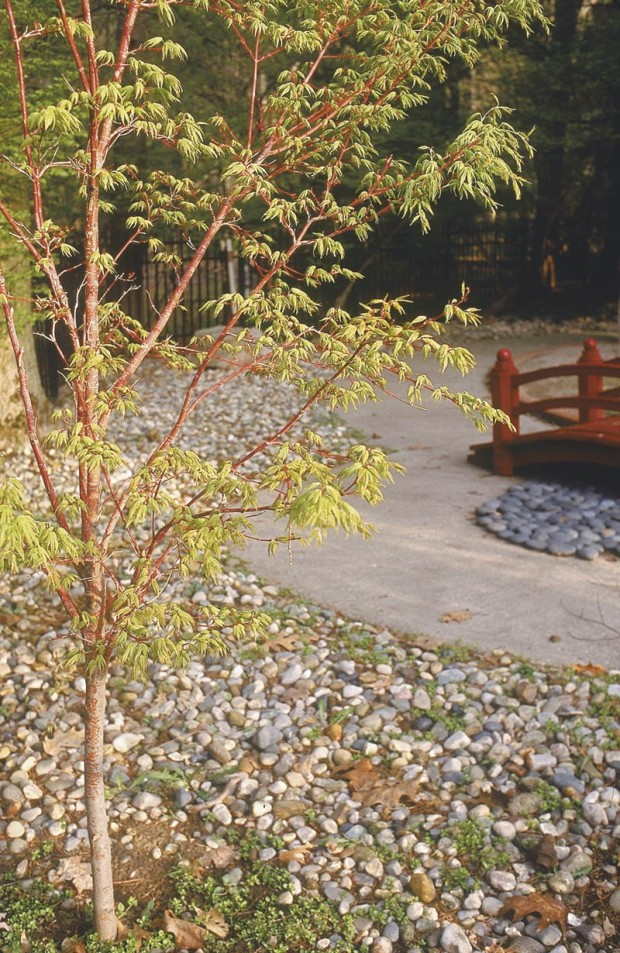 Good garden centers don't have to carry everything. In fact, I prefer it when they stick to doing a superb job with plants. The coral bark maple (Acer palmatum 'Sango Kaku') that reflects the bridge color came from a local Michigan nursery.