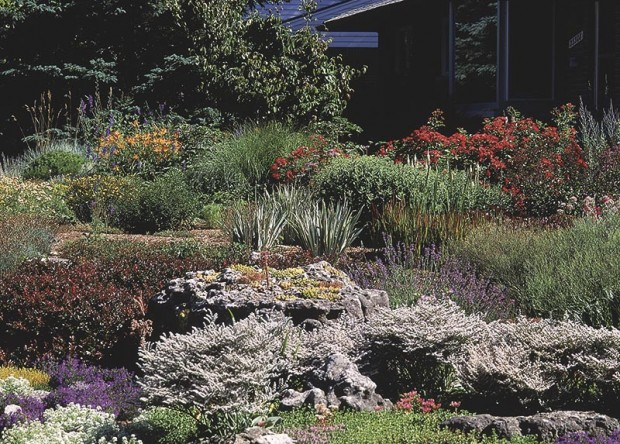 "For the best garden, avoid the word ""tolerate"" as you select plants. Use what will thrive on a site, not just survive. Barberry, German statice, lavender, dianthus and iris can all thrive in the dry soil."