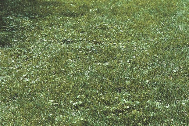 At first it's just a few discolored spots in the lawn where weeds have incurred. If you return the lawn to good health you can keep it at this state of nearly all lawn or even reverse the tide.