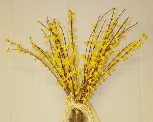 Forsythia courtesy of Backyard Bouquet Farm