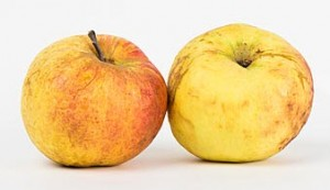 An imprefect exterior of some fruits might be a sign of increased nutrition.