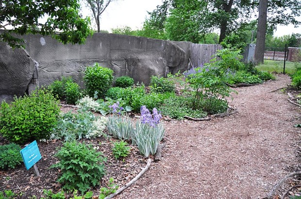 There are no plants surrounding these beds at the Detroit Zoo so there's no reason to install a root barrier. Yet there is need for a foot barrier in a place so heavily trafficked. Weathered logs and dead branches are used because it's readily available material that's in keeping with the overall landscape, where wood from pruning or tree removal is used in exhibits as animal enrichment.