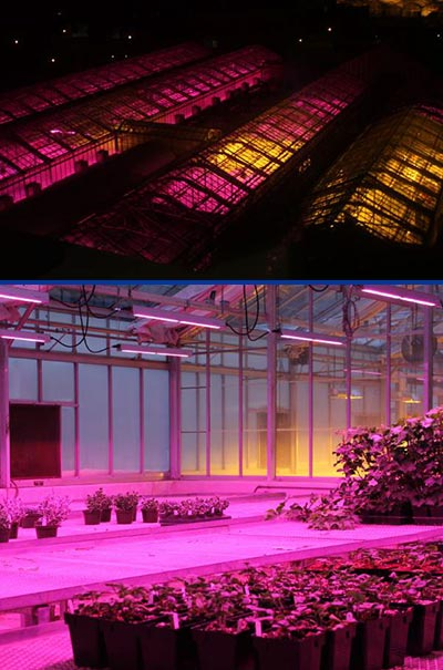 msu-led-greenhouse-lights-0118