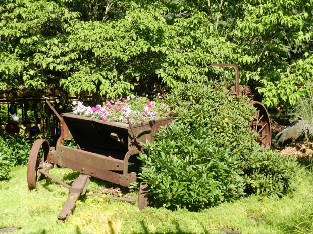 Purchased from a neighbor, this manure spreader is the center of attention in the front yard, along with a white dogwood (Cornus florida 'Weaver's White') and a pink-purple rhododendron ('Elsie Lee').