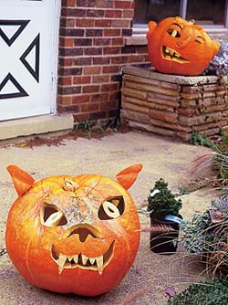 ...an optimist, with new plants waiting to be planted even at Halloween...