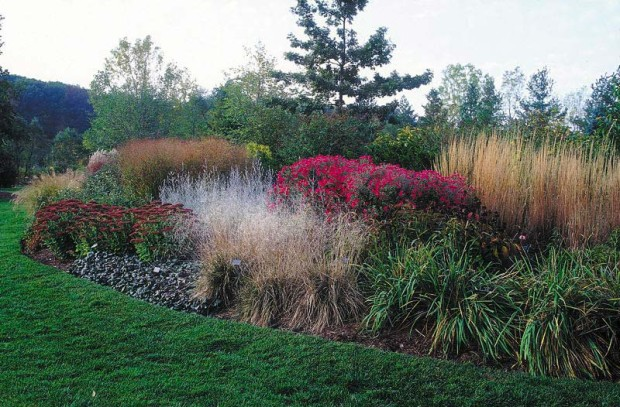 Few plants have such a supportive nature as ornamental grasses. They provide neighboring plants with a windbreak in summer, and perform the same service for birds in winter.
