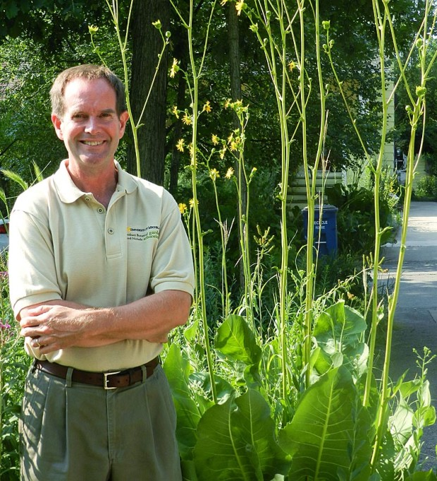 """One of Grese's favorites is prairie dock (Silphium terebinthinaceum). """"I love the broad leaves and tall stalks. The leaves orient on a north-south axis and are wonderful backlit against the sun. The coarse texture is an effective contrast with fine-leaved plants,"""" he described."""