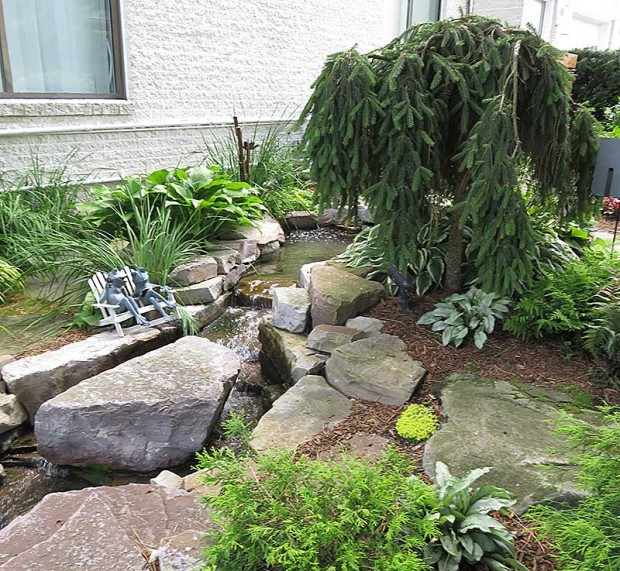 A weeping Norway spruce accents the landscape at the beginning of the stream. Beth collects frog statuary and this frog couple at stream's edge is enjoying the soothing sounds as they relax on a bench.
