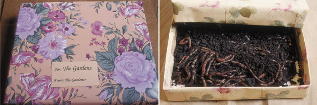 Worms should be considered a gift. They move into the cool, moist mulch and dine on the leafier organic matter. Between meals they burrow into the moist clay, dragging organic matter with them and depositing worm manure (casts) along the way.