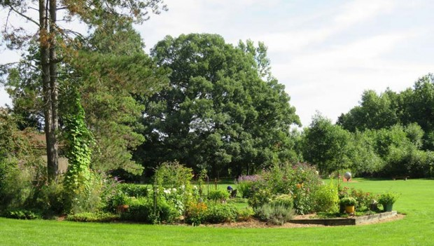 One of many garden beds in Janice and Paul's landscape, with the huge, 200-year-old oak tree as a backdrop.