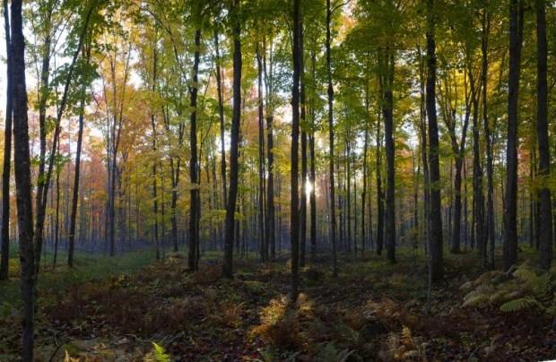 big-tree-hunt-0918