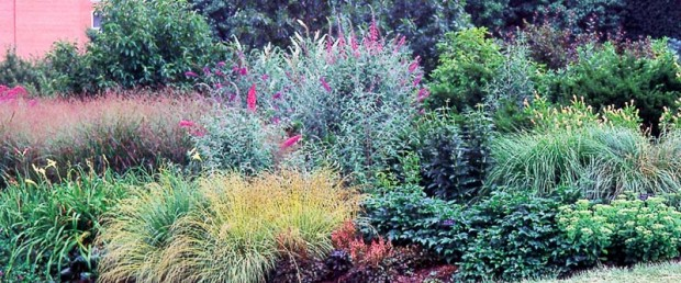 Some gardening seasons are better than others. Don't look and learn only during the best years, but also when disasters such as drought strike. There's a lot to be learned, such as the fact that butterfly bushes, sedum and grasses not only survive drought and heat that wipe out astilbe and daylilies, but also look good under those conditions.
