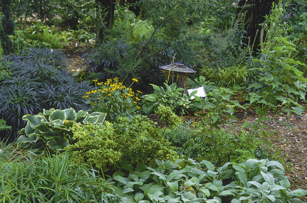 Cool Shade: In high summer a shady spot seems even cooler and more refreshing when it's lush with greenery.