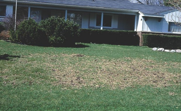 Don't spread seed on dead weeds. Rake or till to let the seed fall on loosened soil, as shown here.