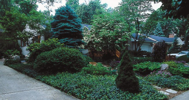 High-maintenance perennial beds can be changed over to, or allowed to become, groundcover and shrub areas. These at the Laudenslager residence contribute foliage color, texture and other benefits, yet require far less care than typical flower gardens.