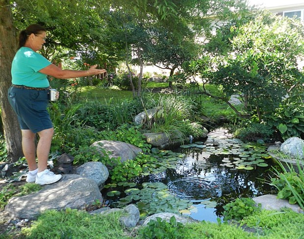 Cathy feeds goldfish in the figure eight pond.