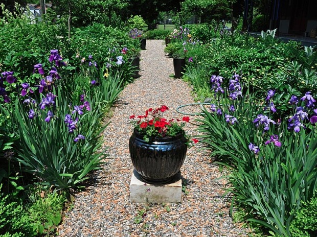 "Irises and peonies in Wil Strickland's garden exemplify his advice, ""Watch what does well. Plant a lot of that and let the plants fight it out. I call it choosing your weeds."""