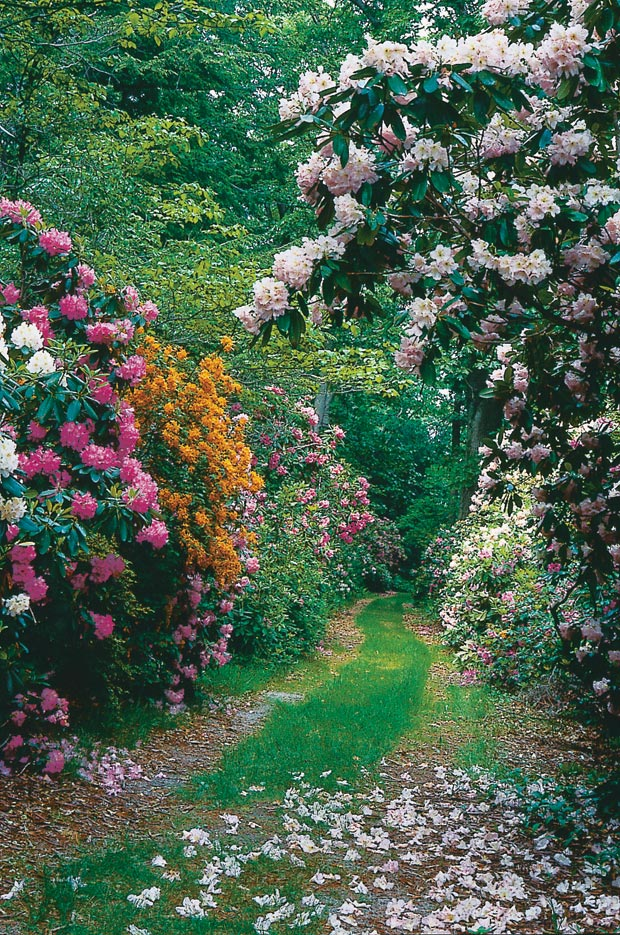 We see so many images of mature, full gardens. It's no wonder instant landscapes are on many wish lists.
