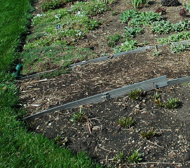 Metal can be longer lasting than plastic edging but it is just as likely to be forced up out of the ground if not set in well to begin.