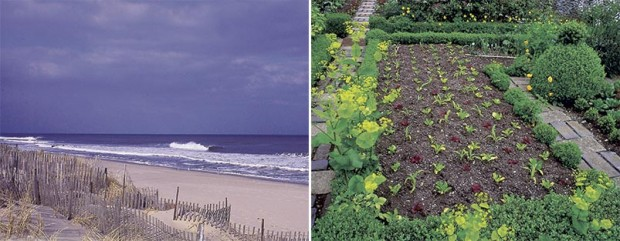Left: The moon rules the tides. Right: Does it also rule the growth of these plants?