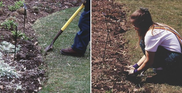 …and leaning back on the handle of the spade, which forces the blade up and loosens that soil along the bed edge. Removing weeds from the edge is simple in that loose soil.