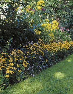 We ought to plant narrow strip edges with a shorter turnover in mind. Daylilies, peonies, black-eyed Susans, and Sedum 'Autumn Joy' make excellent short hedges that can be cut to the ground without harm when needed.