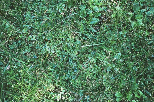 News flash—those weeds aren't taking over your lawn, they are your lawn!
